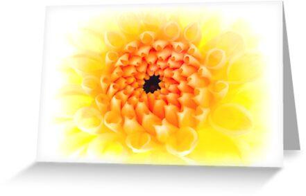 Yellow Dhalia by Ra12