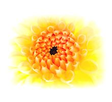 Yellow Dhalia Photographic Print