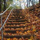 Leaf strewn path on Red Wing Bluff by Robin Clifton