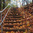 Leaf strewn path on Red Wing Bluff by Robin Clifton