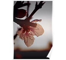 Blossoming light Poster
