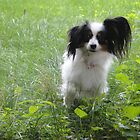 Millie My Papillion by Danielle Gill
