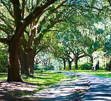 Oak Covered Road by imagetj
