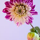 Chrysanthemum so Bright  by DIANE  FIFIELD