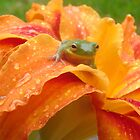 Day Lily with a Tree Frog by ohhrah