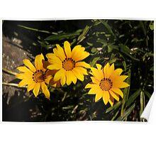 Treasure Flower Poster