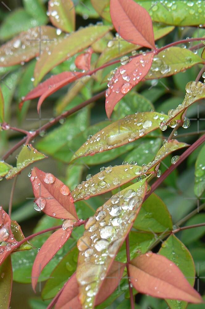tears n jewels:) by LisaBeth