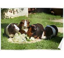 Guinea Pigs! Poster