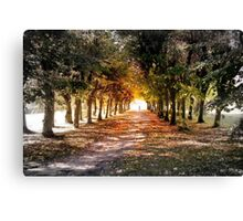 The Path Canvas Print