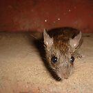 mouse by rainbowvortex
