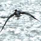 Curlew by Russell Couch