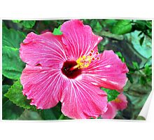 Very pink hibiscus Poster