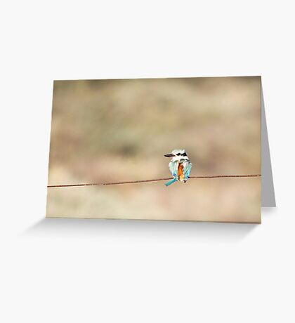 Red-backed Kingfisher Greeting Card