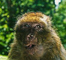 Monkey Business by Danny Roozen