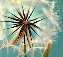Wish Fluff by Jessica Alpern