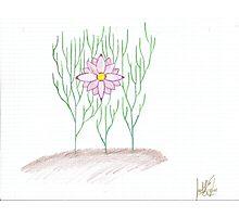 Wondrous Flower Home Photographic Print