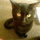 michael CATson (kit kat) by catnip addict manor