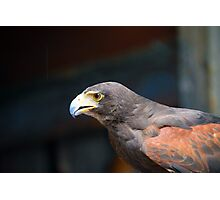 Hawk Photographic Print