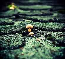 Tiny Shrooms by DDLeach