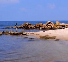 Miniature Beach  by Zuri Lamper