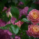 Flower Garden by Halobrianna