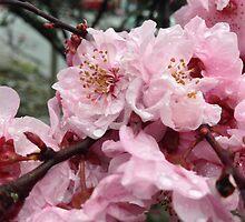 Spring's Gentle Dew - Pink by Saiyn