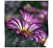 Walts garden 20101001 1724 Poster