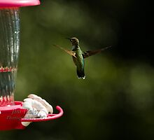 Hummer Posing by Jim Haley
