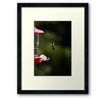 Hummer Posing Framed Print