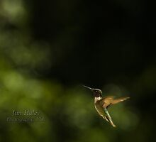 Hummer Posing - 2 by Jim Haley