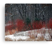 Red-twigged Dogwood at Heron Pond Canvas Print