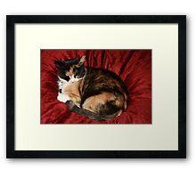 Sleeping Beauty - 10 Framed Print