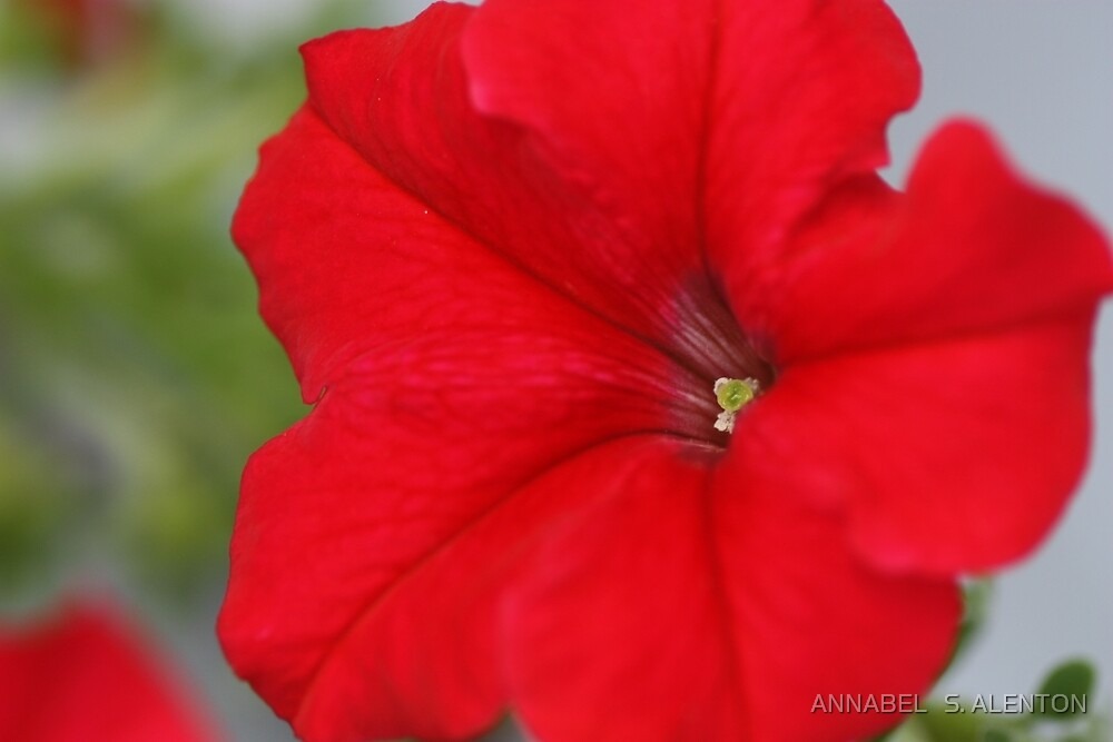 pure red by ANNABEL   S. ALENTON