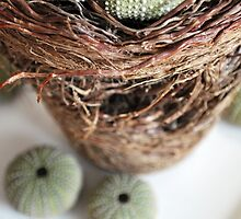 Urchins in on all around Root Bound by imonlyhuman