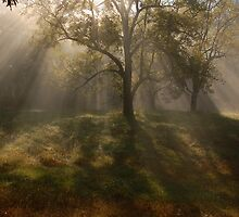 early light by dc witmer