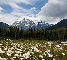 Mt Robson by Carol Bock