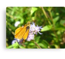 Butterfly ~ Orange Skipperling Canvas Print