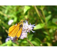 Butterfly ~ Orange Skipperling Photographic Print