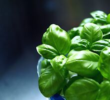 my own homegrown baby basil by Talia7Oly