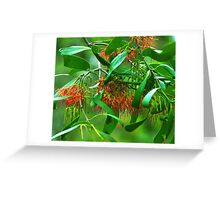 Amyema congener Greeting Card