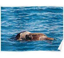 Sea Turtles 1 Poster