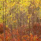 Autumnal Impression_1 by sundawg7