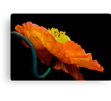 Poppy Popping Canvas Print