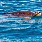 Sea Turtle 2 by Jaxybelle