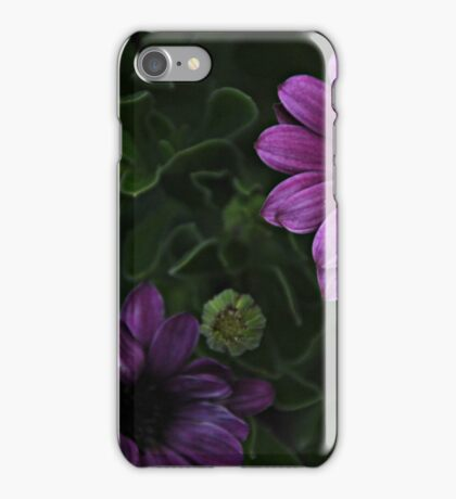 Purple African Daisies iPhone Case/Skin