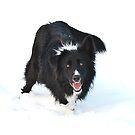 Snowdog by Karen Havenaar