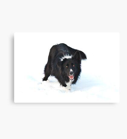 Snowdog Canvas Print