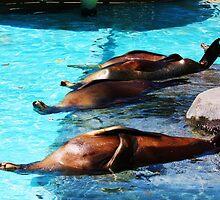 Sunbathing - Sealife Park, Hawaii by xuyichi