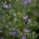 Purple mist by BecQuist