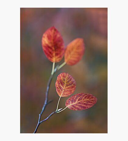 Colour my life Photographic Print